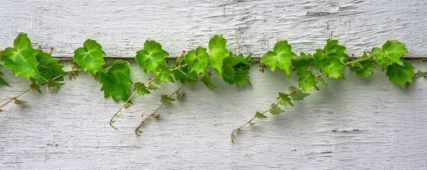 緑 GREEN 葉 LEAF リーフ 岡山眼鏡店 okayamagankyoten
