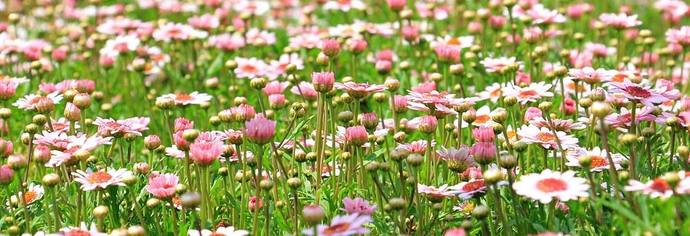 花 フラワー Flower 春 Spring 岡山眼鏡店 okayamagankyoten